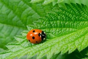 natural cannabis pest remedies