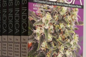 Cannabis Indica study of the most popular indica strains