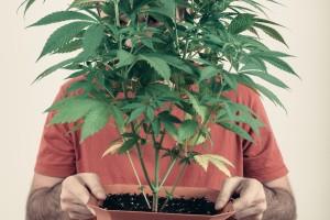 dr bob cannabis biotech