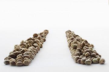 feminized cannabis seed techniques