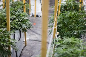 How to optimize grow using CO2