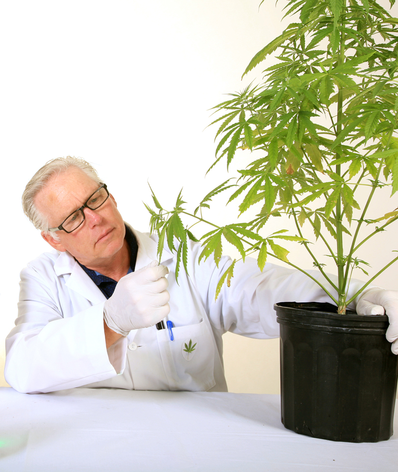 Cannabis and medical marijuana research