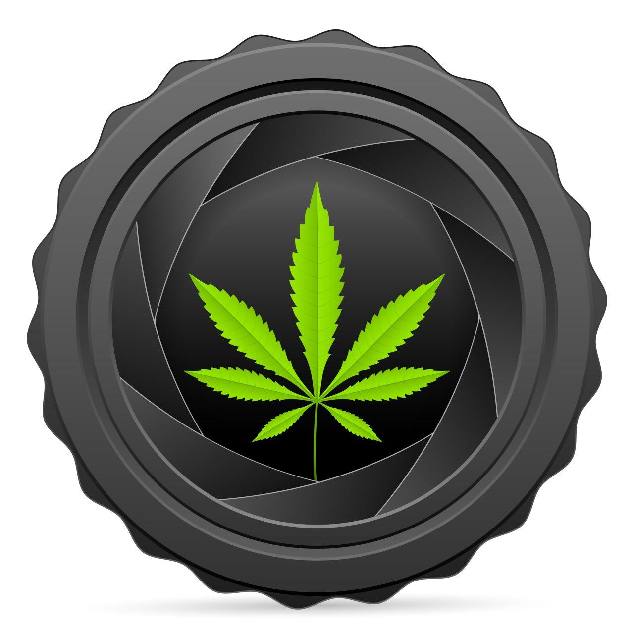 Cannabis creativity business