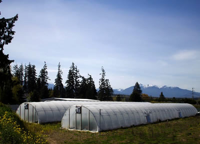 Canna Organix,The Facility in it's youth.